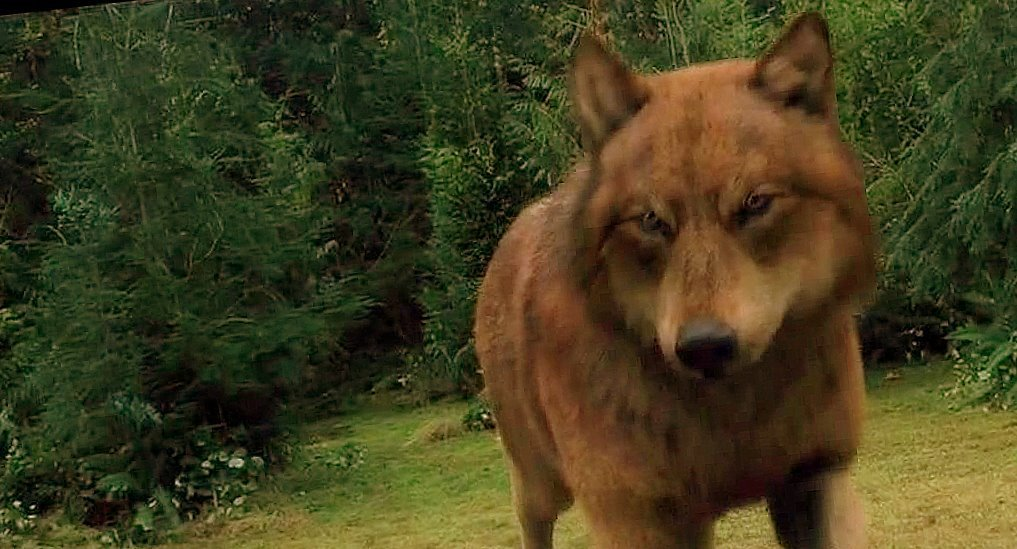 eclipse wolves - jacob - Twilight Series Fan Art (13783421) - Fanpop