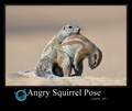 Angry Squirrel Pose