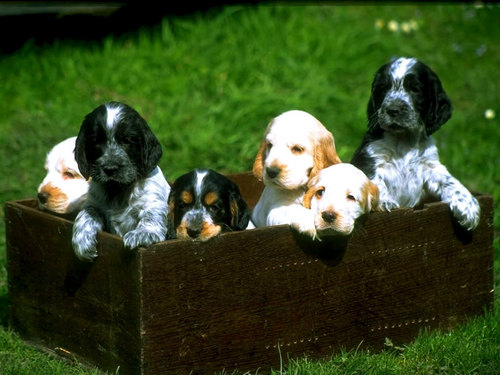 Box of Puppies