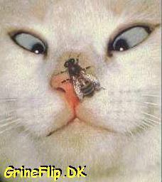 the worst spot on Fanpop wallpaper called Cat