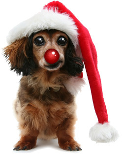 Christmas images Christmas Dog wallpaper and background photos ...
