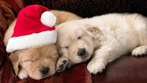 Weihnachten Hunde