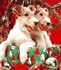 क्रिस्मस कुत्ता