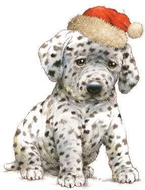 Natale dog