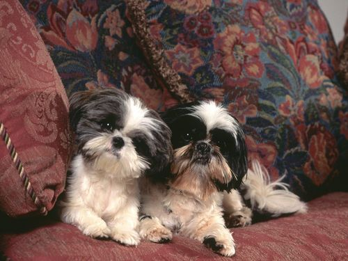Cute Cani