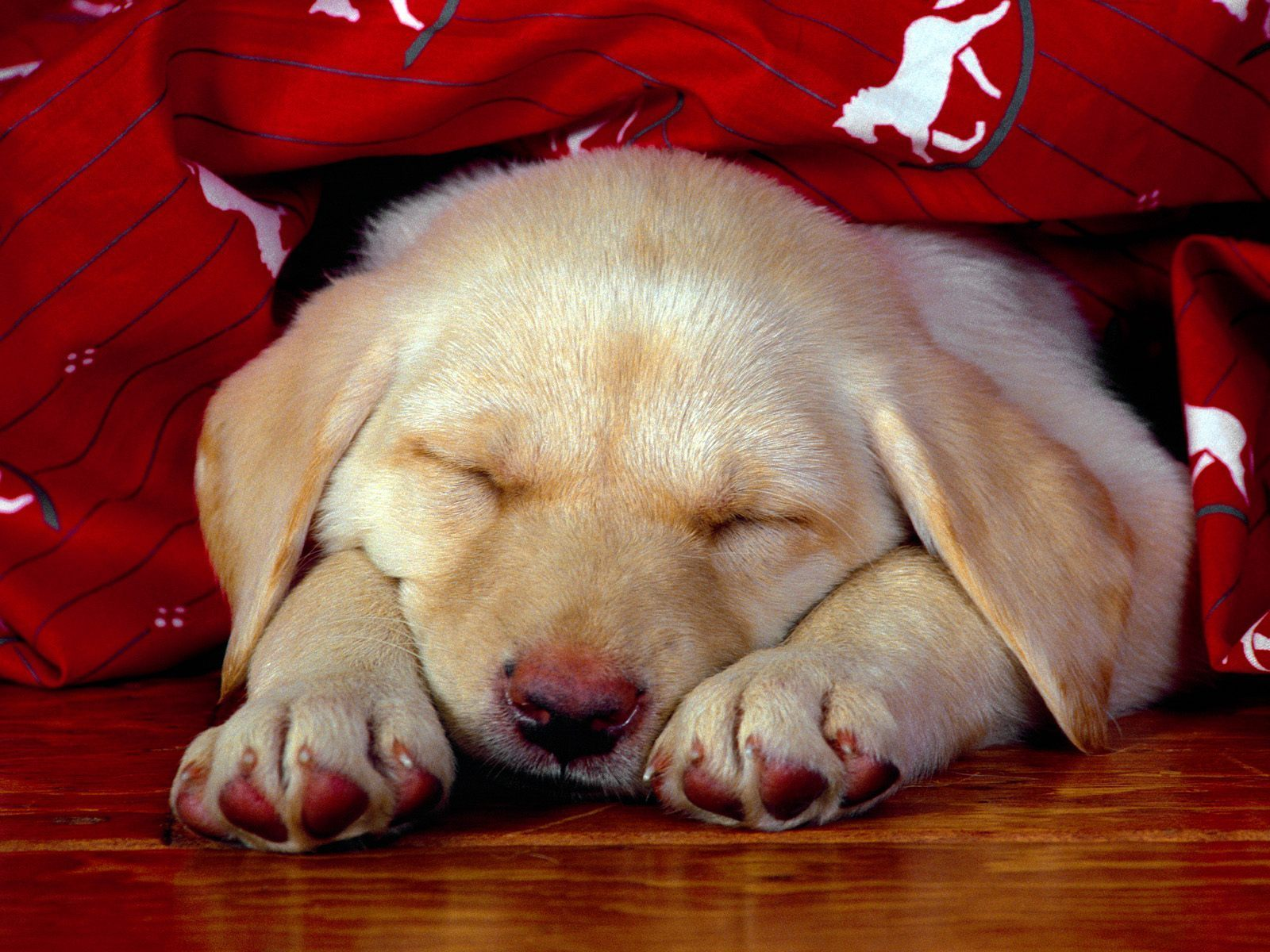 Sweet Dogs Wallpaper Dogs images Cute Dogs ...