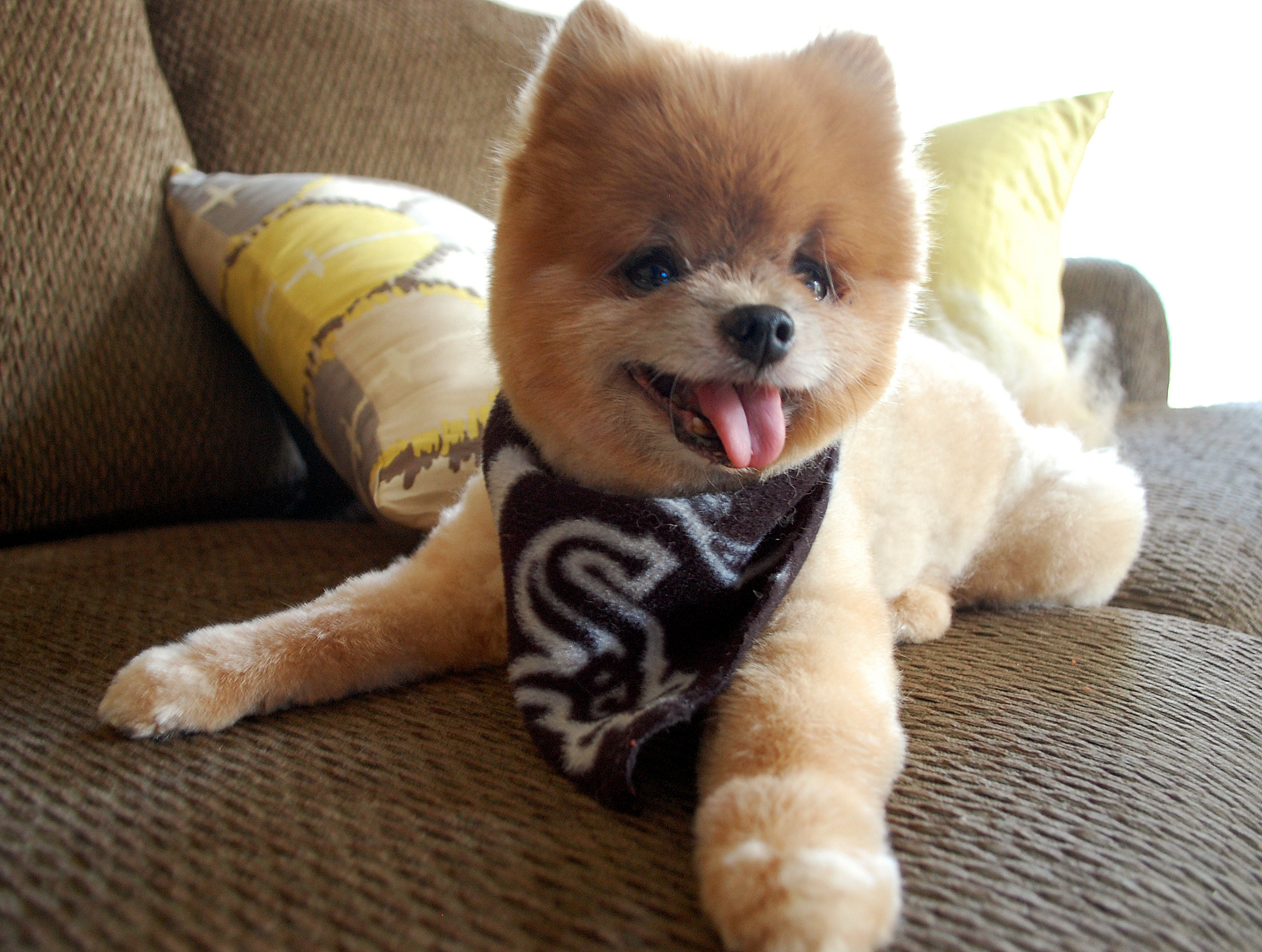 Cute Puppies Dog Breed