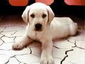 Cute cachorro, filhote de cachorro
