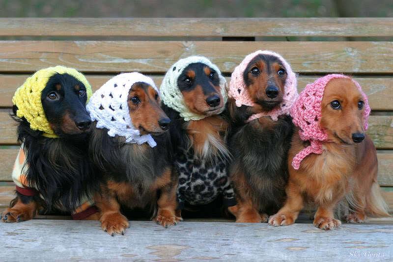 Cuties :)