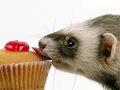 ferret, chororo-kaya & cupcake :P
