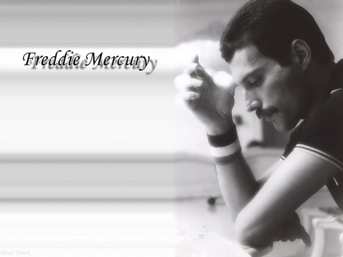 Freddie Mercury - freddie-mercury Wallpaper