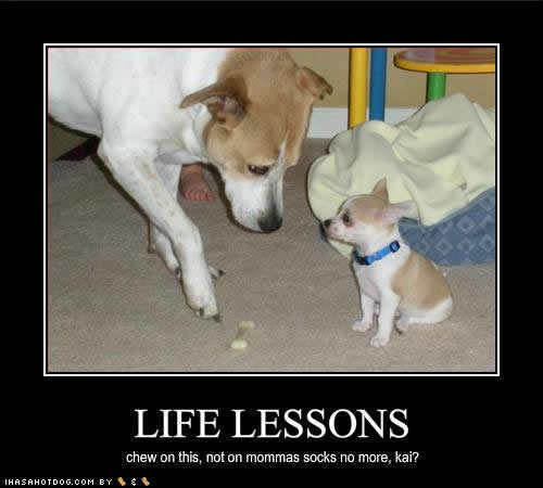 Aso wolpeyper called Lifes Lessons