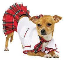 School dog..