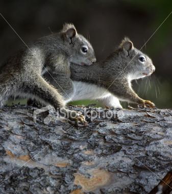 eichhörnchen Pose XD