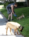 Walking with his dogs – 15 July 2010 - twilight-series photo