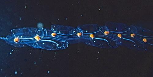 deep sea life wallpaper entitled creepy