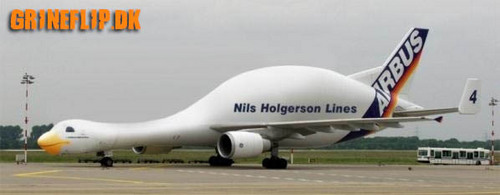 アヒル, 鴨 plane