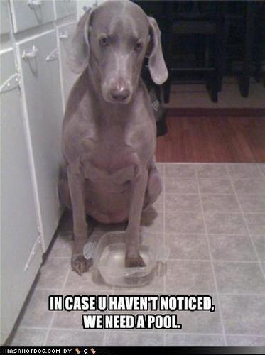lol........dogs