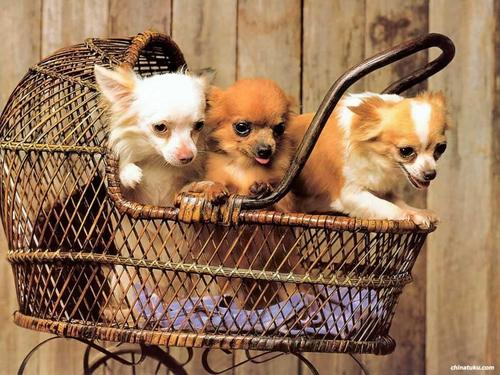 Cute Dog Обои