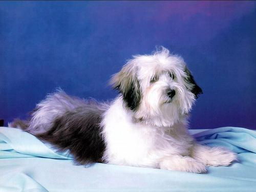 Cute Dog Hintergrund