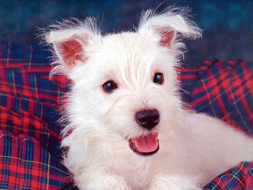 Cute Dog 바탕화면