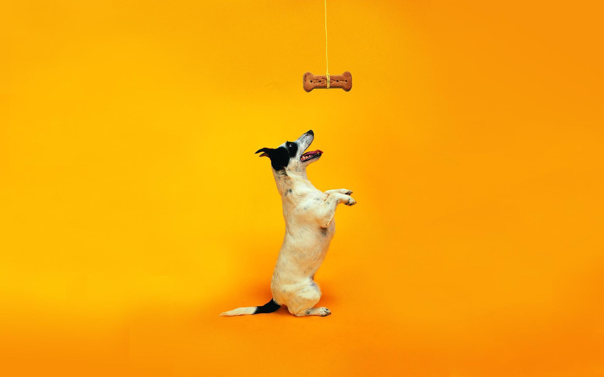 cute dog   dogs wallpaper 13903940   fanpop