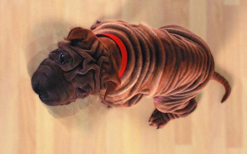 Cute Dog !!