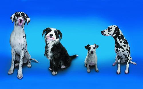 Cute chiens