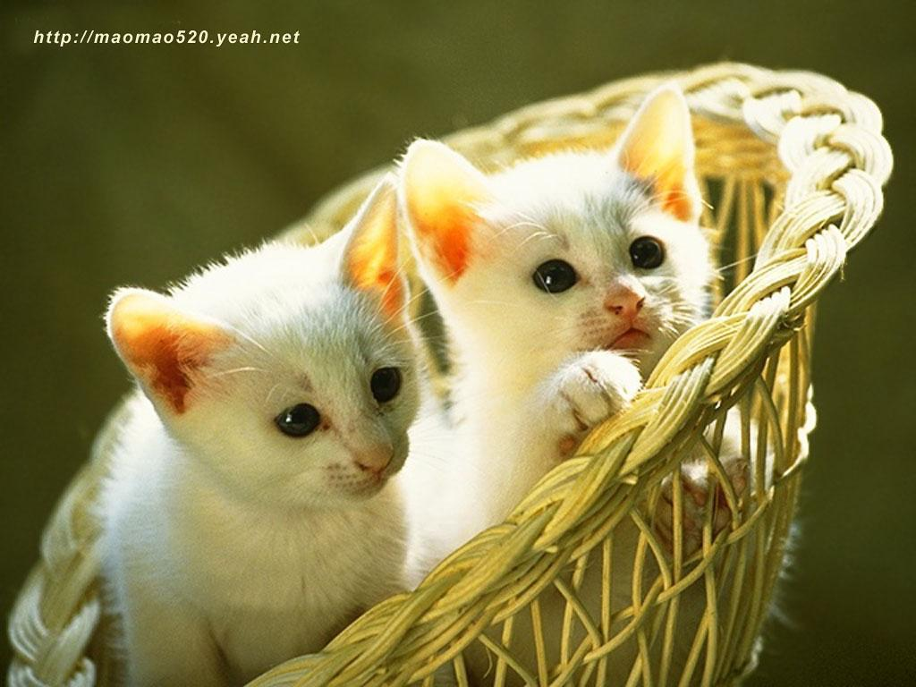 Kittens images cute kitten wallpaper hd wallpaper and background kittens images cute kitten wallpaper hd wallpaper and background photos thecheapjerseys Gallery