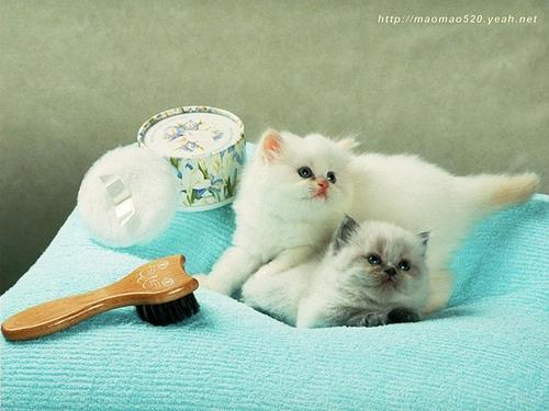 Cute Kitten Hintergrund