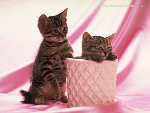 Cute Kitten achtergrond
