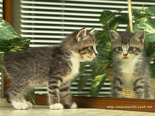 Cute Kitten fondo de pantalla
