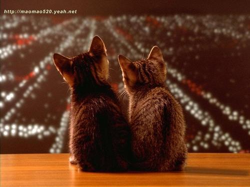 Cute Kitten fond d'écran