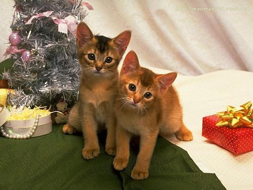Cute Kitten 壁紙