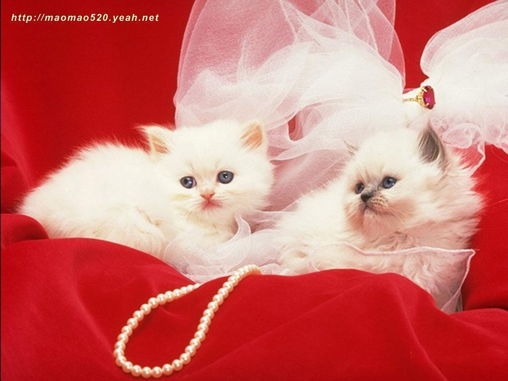 Kittens cute kitten wallpaper