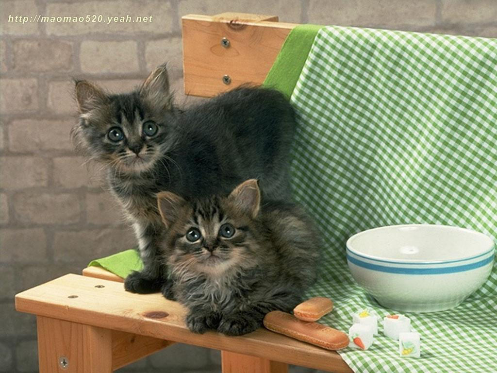 Cute Kitten kertas dinding