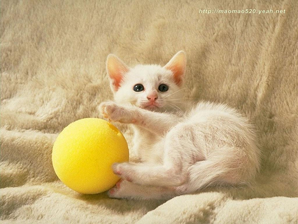 kittens images cute kitten wallpaper hd wallpaper and