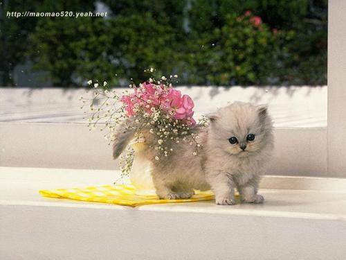 Cute Kitten Wallpaper - kittens Wallpaper