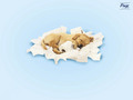 cute-puppies - Cute Puppy wallpaper