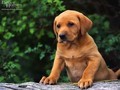 Cute chiot