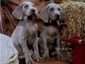 Cute Puppy - cute-puppies wallpaper