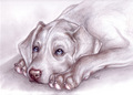 Cute anjing, anak anjing