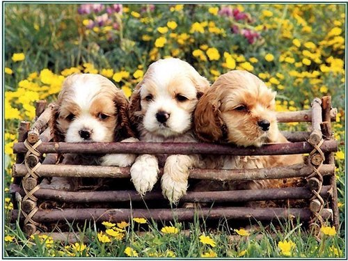 Puppies wallpaper entitled Cute Puppy