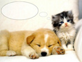 puppies - Cute Puppy wallpaper