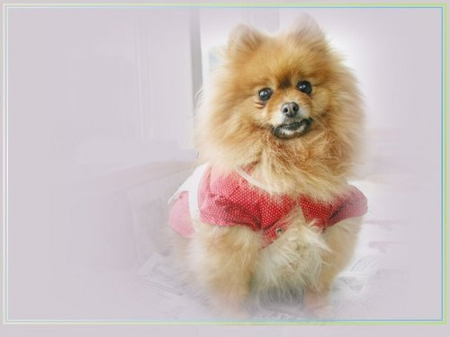 Cute щенок