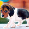 Cute Puppy - puppies Icon