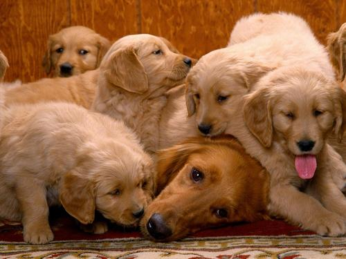 Dog Family !