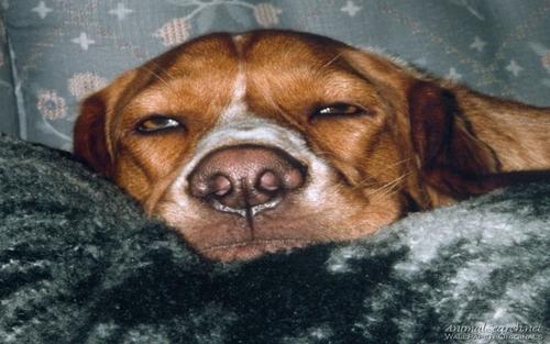 Hound Dog Looking Cute