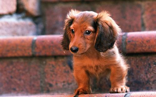 Lovely Dog wolpeyper