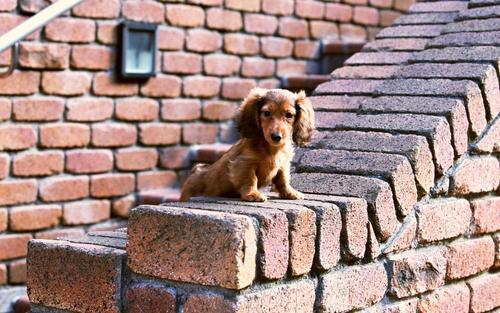 Lovely Dog Hintergrund